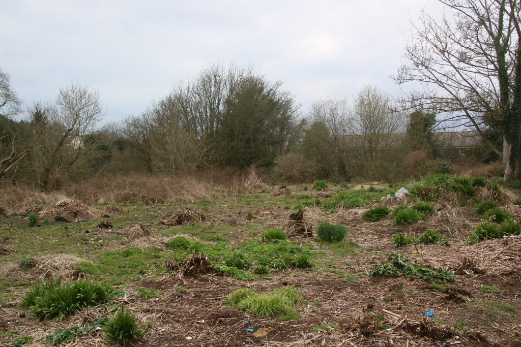 Area of cleared land, with new growth emerging