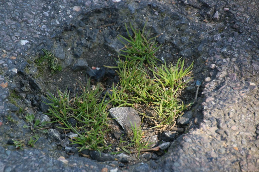 Pothole with grass and small plants growing in it