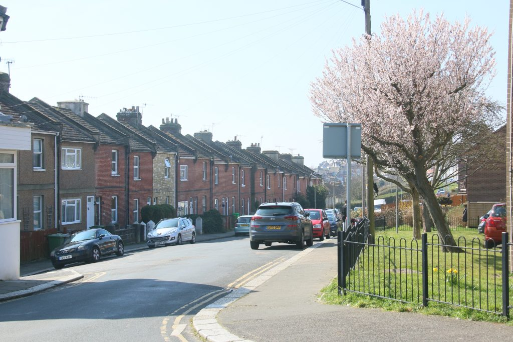 North Terrace - cherry blossom on bloom, residential street behind